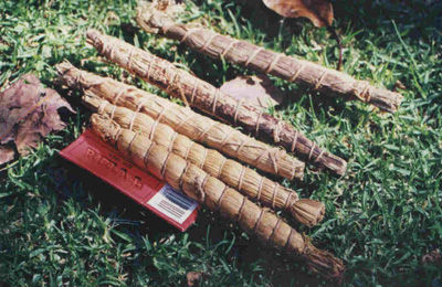 Malawi Cobs- from Lake Malawi, Africa
