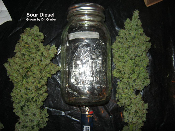 Sour Diesel<br> Grown by Dr. Gruber